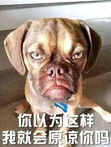狗狗接回家几天就死了,3招教你鉴别星期狗