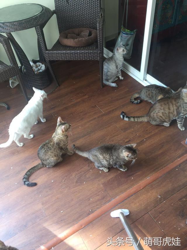 猫害怕吹风机怎么办图片