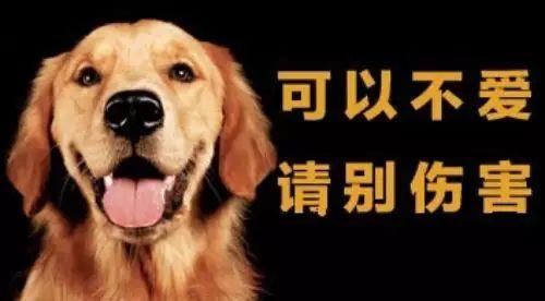 准研究生虐狗事件发生,狗主人发声不原谅,网友关心狗狗伤势