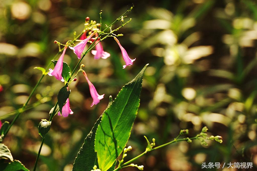 并有丰富的热带植物群落.