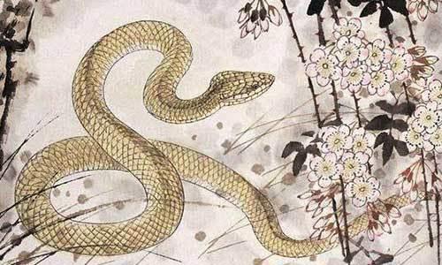 2018戊戌年[蛇]整体运势(生太岁) 易鑫老师微博 新浪博客