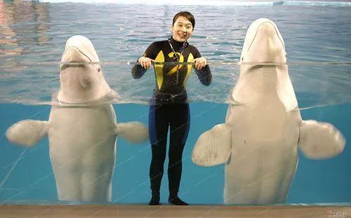 【免费】海昌极地海洋世界,众多奇趣表演剧场假梦幻水母馆+4D体验馆!