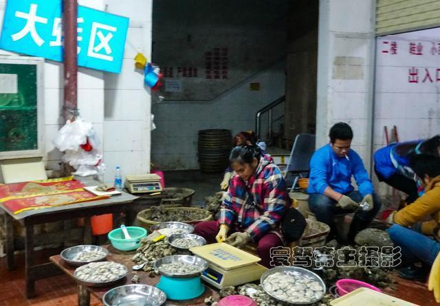 清晨海鲜市场寻大蚝却不见,原来它们都去钦州蚝情节上当明星去了