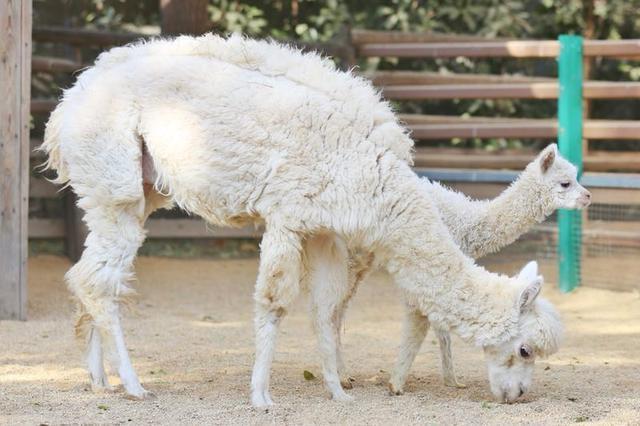 """郑州动物园新添296个""""萌宝宝"""" 瞅瞅ta们让人心都化了!"""