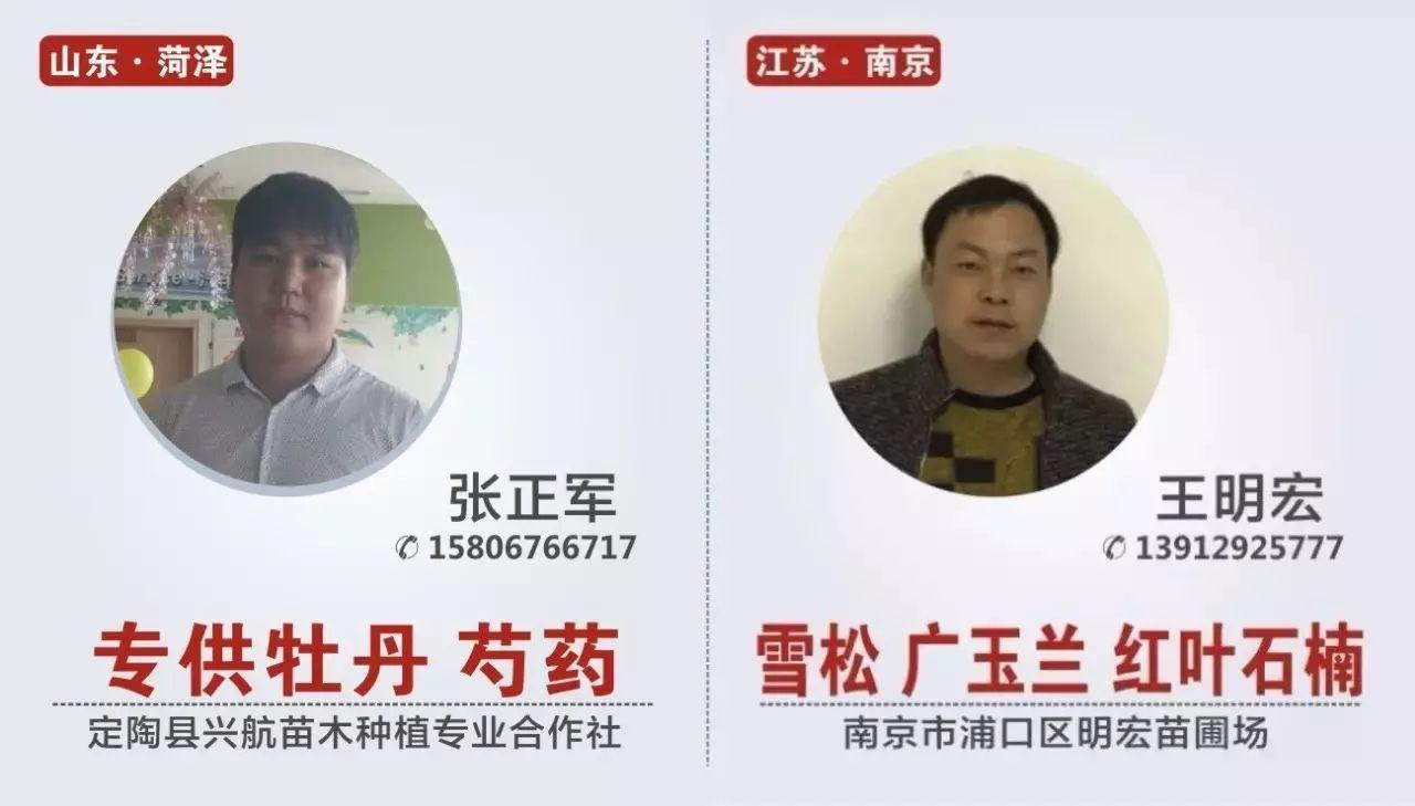 """##:下一年天津沿海新区40亿元建""""绿肺"""",以国槐、白"""