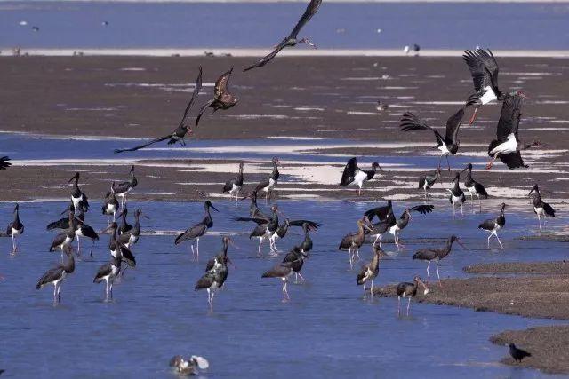 横断山区野生动物考察|考察活动招募