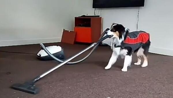 爆笑图片:这些狗子居然会做家务 太逗乐太搞笑了图片