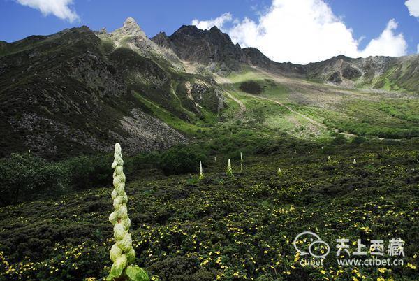 """喜玛拉雅山脉无数,唯这一个被称作""""小江南"""""""