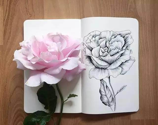 用最简简单单的铅笔和针管笔,画出植物最美的样子!快来试试