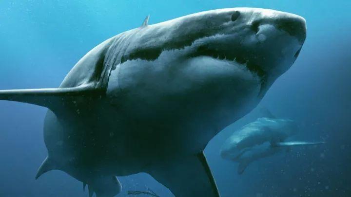 共生成420个特效镜头,cg笼子,3d鲨鱼.讲真,你要不说,我都以为是真的.