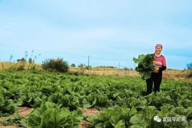 """""""古丽加孜拉笑呵呵地说,明年她要重新规划院子,扩大养殖规模,发展蛋鸡"""