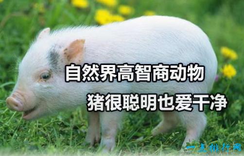 最聪明的动物_盘点世界十种最聪明的动物