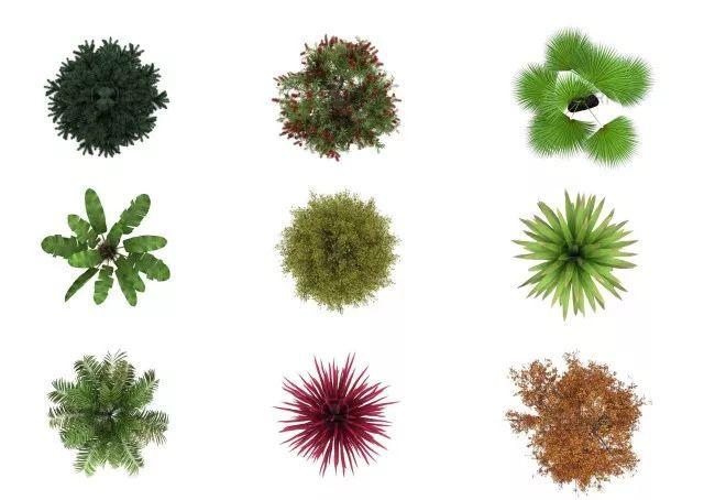 立面植物素材合集