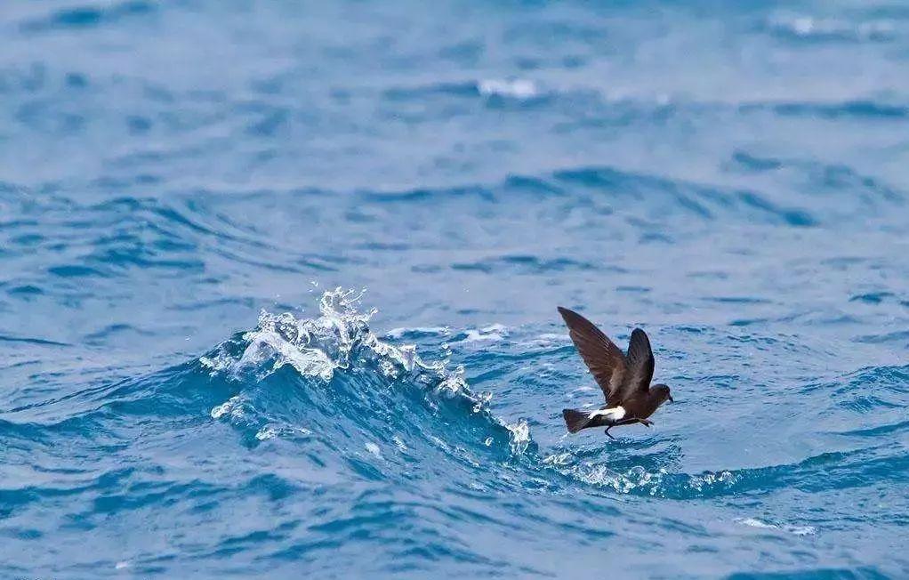 木兰香朗诵:海燕(高尔基)2.3奶牛关图片