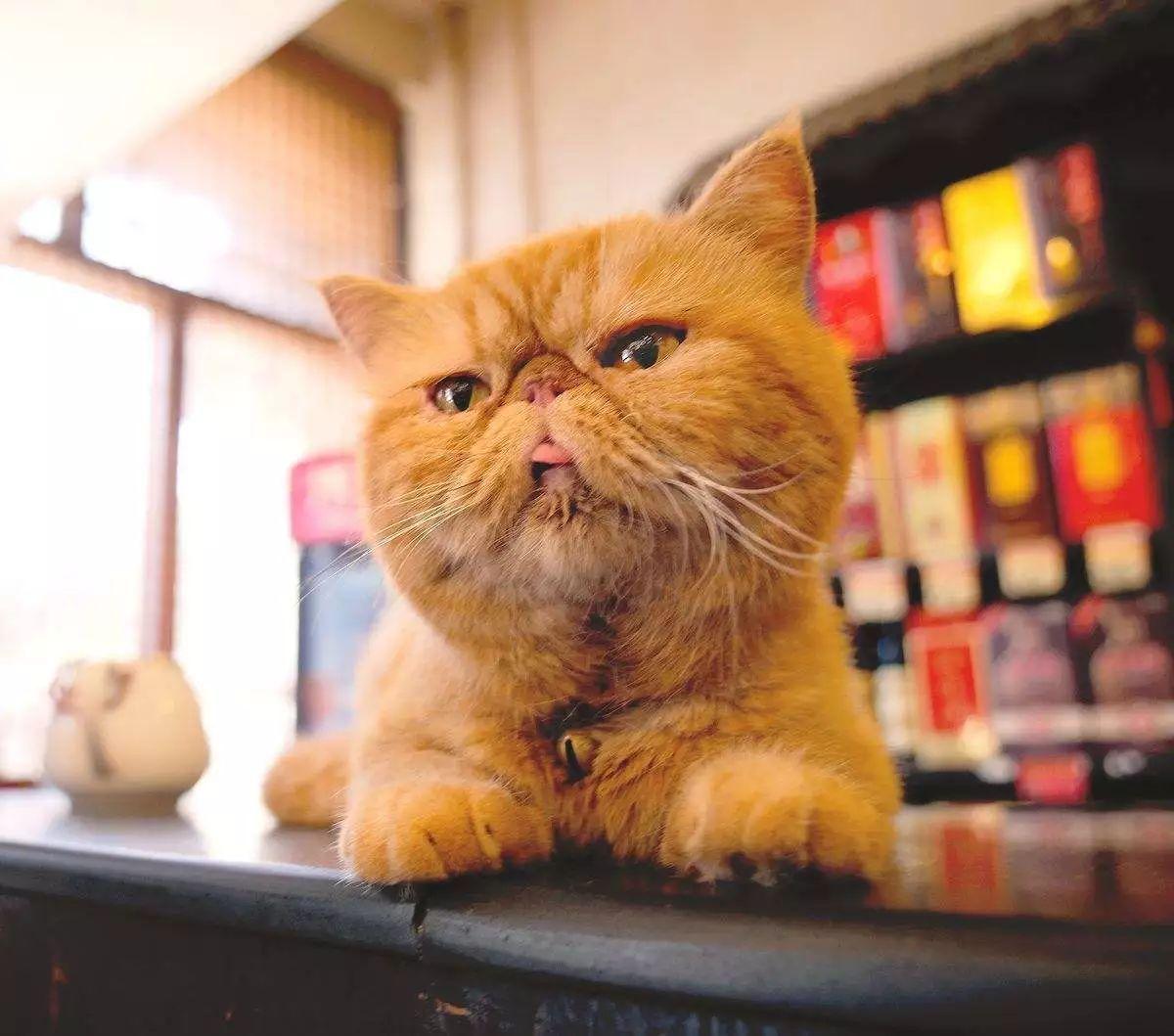 家里的猫突然性情大变,知道有一天,真相大白了