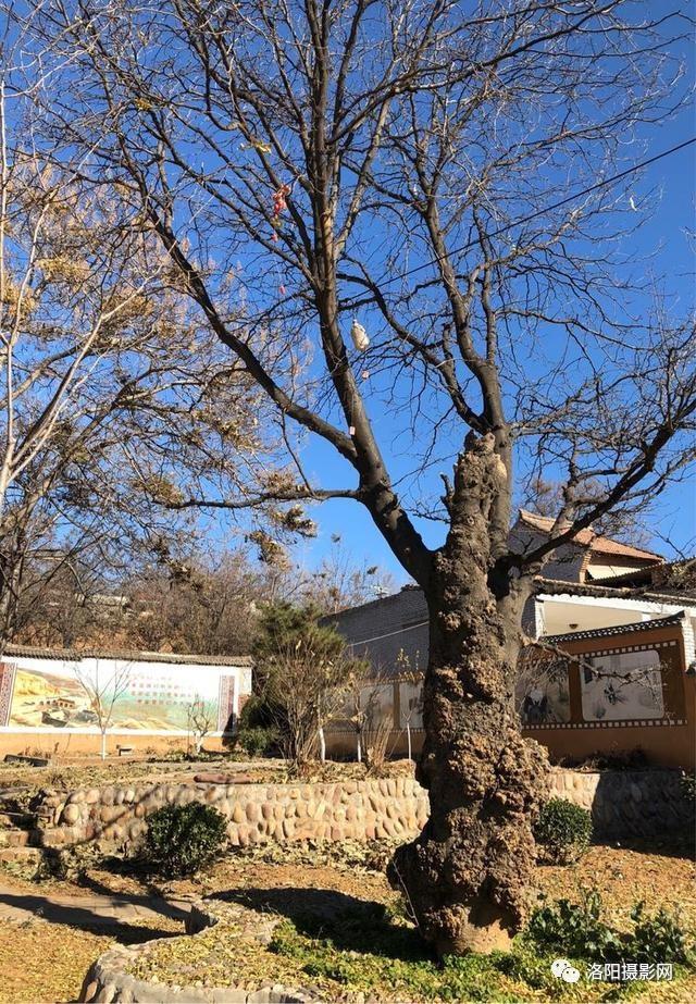冬日难得晴空万里,洛阳开车孟津庙护村,体验老洛阳民俗生活