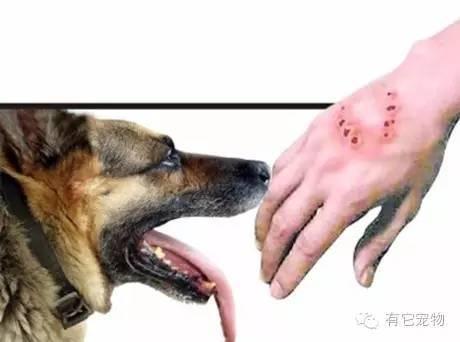 打完狂犬疫苗被狗咬_狗咬伤,如何判断是否需要打狂犬疫苗?