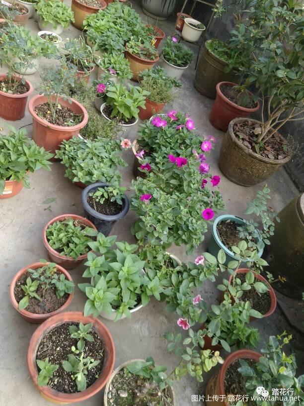 [diy] 废物利用,自己制作的能旋转的花架