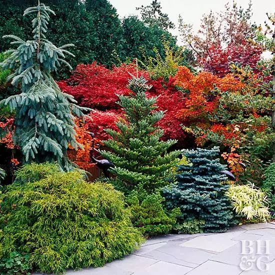 常绿植物在花园中怎么搭配使用