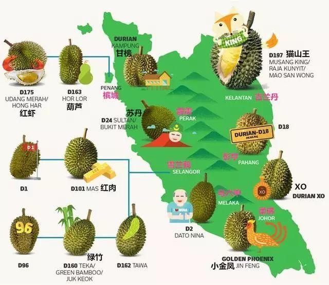 泰国手绘卡通地图