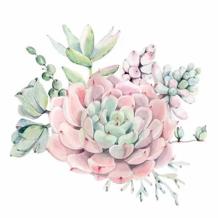 嫩逼艺术图_她笔下的植物水彩 画面清新柔和 有种粉粉嫩嫩的感觉 nature除了艺术