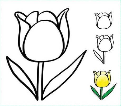儿童简笔画郁金香,植物简笔画,花卉简笔画图片.