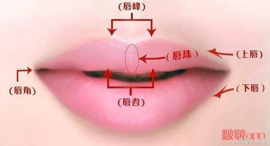 娱乐 正文  从唇形上,大致可以分为微笑唇(m唇),含珠唇,嘟嘟唇(花瓣唇图片