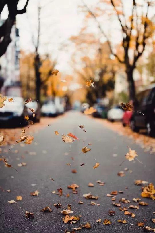 【每日一禅】心安,便是活着的最好状态 - 清 雅 - 清     雅博客