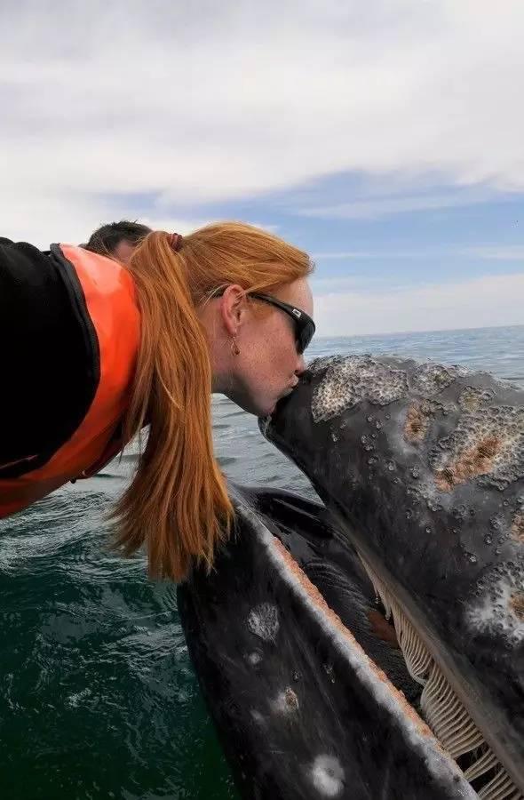 在这个小小的半岛上,竟然能看到全球三分之一的鲸鱼!