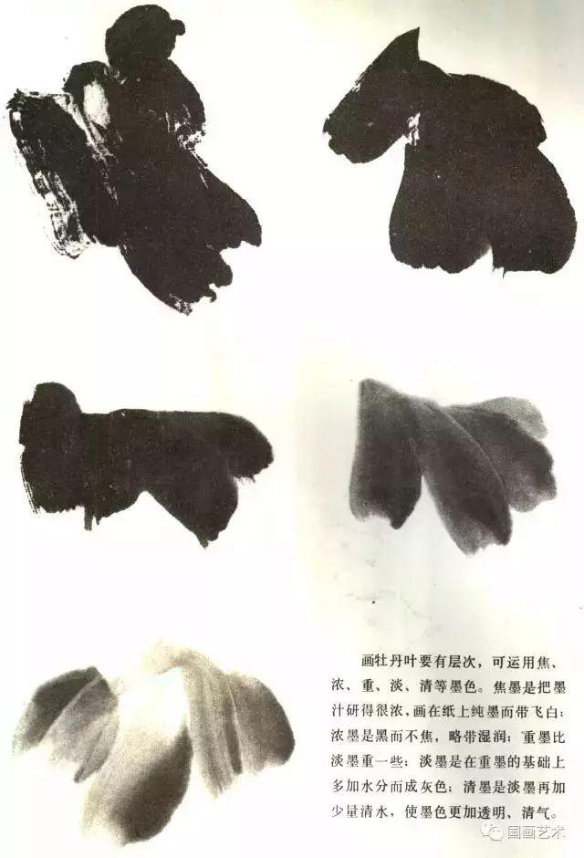 文化 正文  画牡丹叶要有层次,可运用焦,浓,重,淡,清等墨色.图片