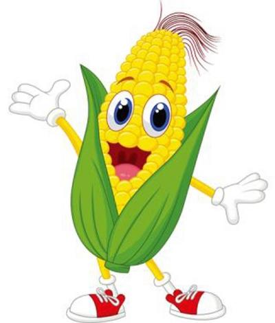 玉米手绘成长画画