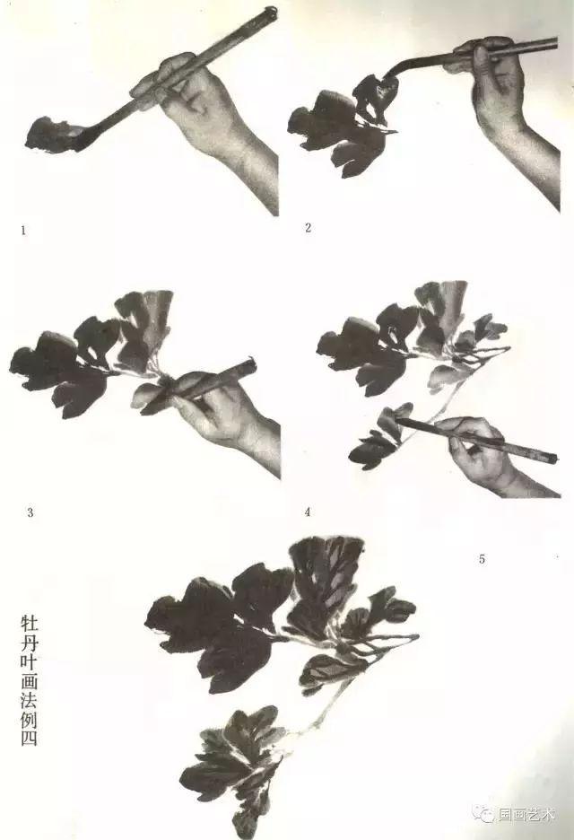 """一个生长完全的牡丹叶子称为""""三叉九顶""""(或""""三叉九叶""""),大叶柄长一尺图片"""