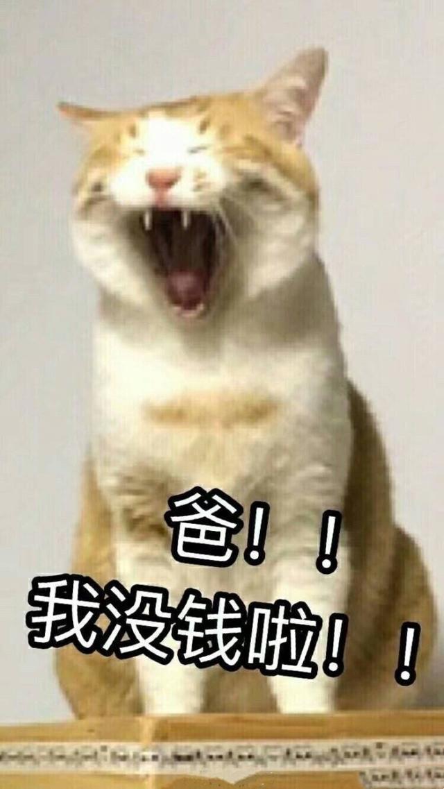 壁纸动物狗狗狗猫步骤小猫桌面640_1137竖版竖屏猫咪在网上买火车票的具体手机图片