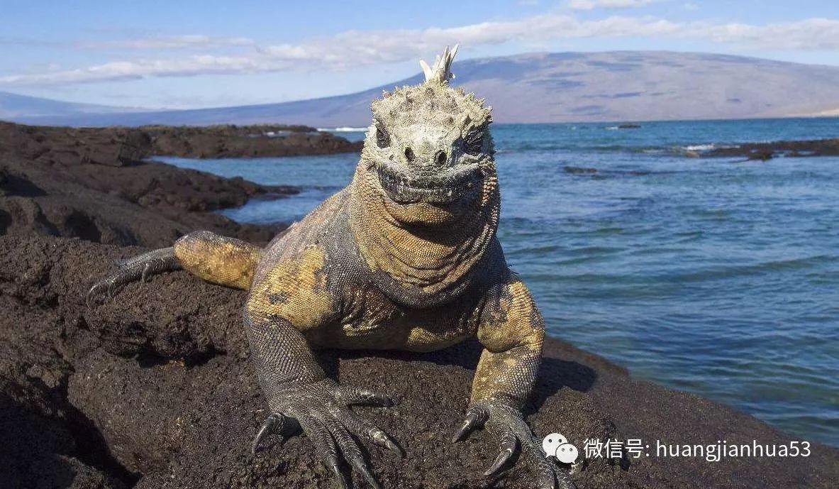 在科隆群岛上,生活着700多种地面动物