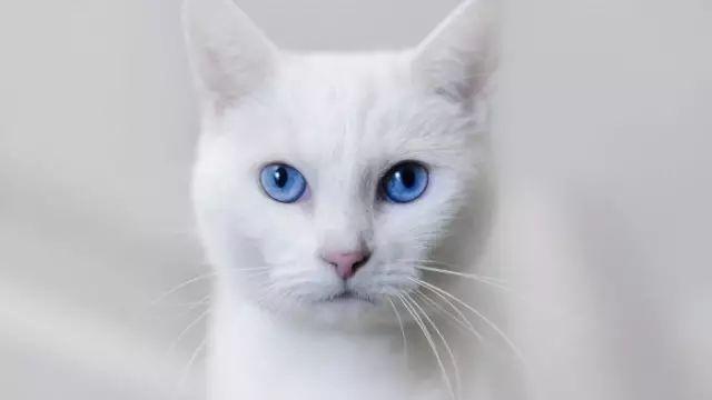白猫和黑猫生的下一代,啥样?灰猫?黑白花猫?图片