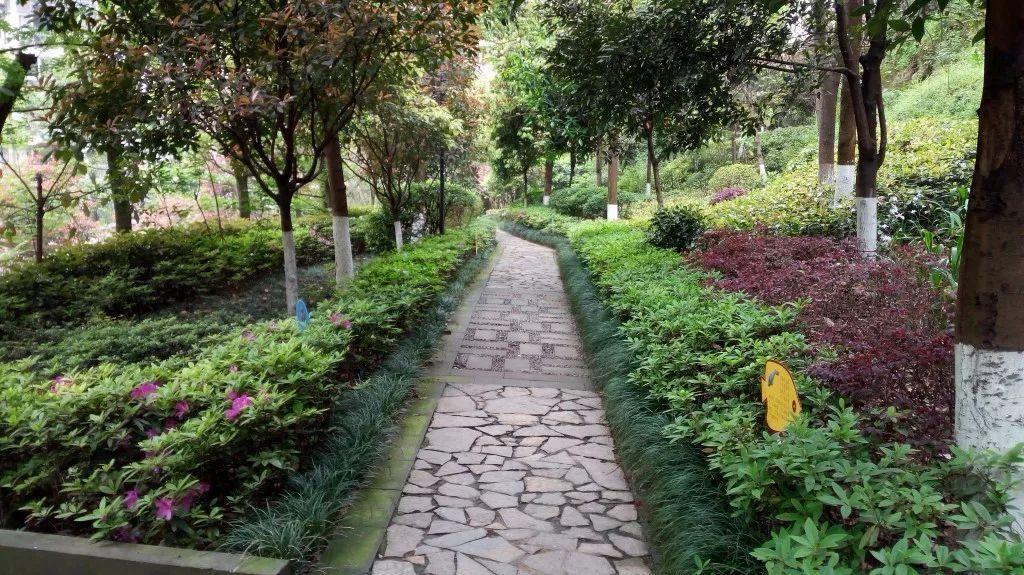 鳳天生態公園登山步道圖片