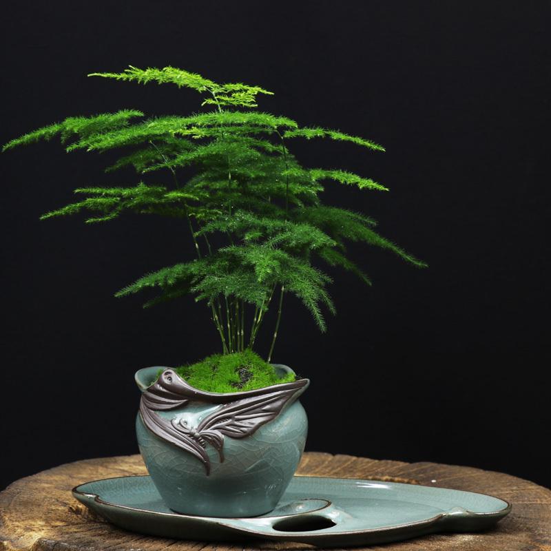 绿色小盆栽