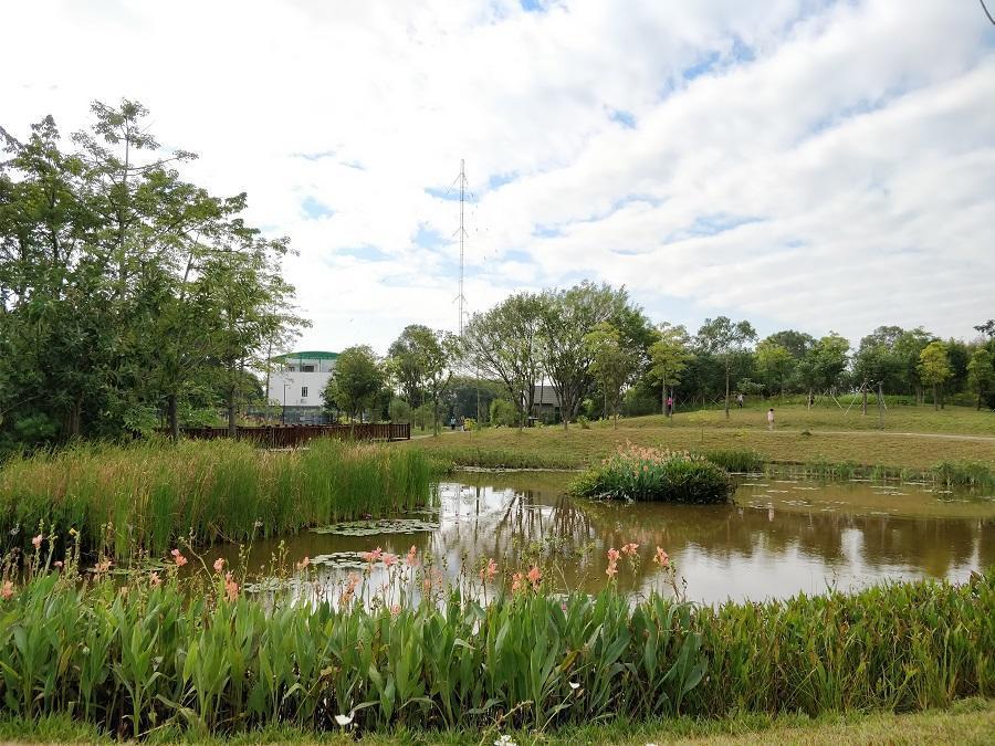 紅樹林生態公園改造項目——對池塘岸邊地形進行調整并種植濕生植物圖片
