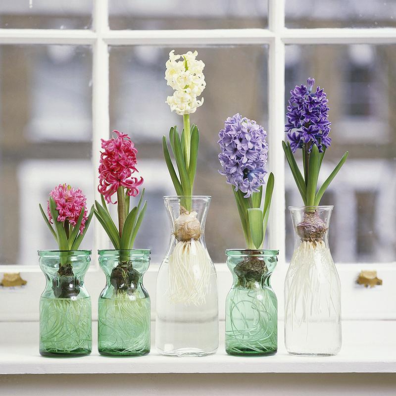 2018流行养这5种花卉室内盆栽,好看不贵又好养图片