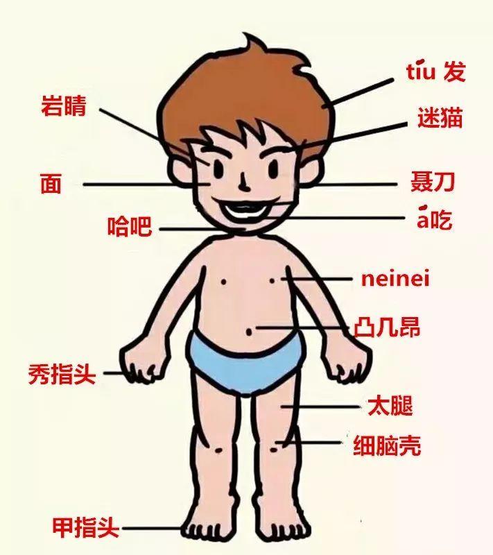 人体结构_弋阳人的身体结构,你知多少