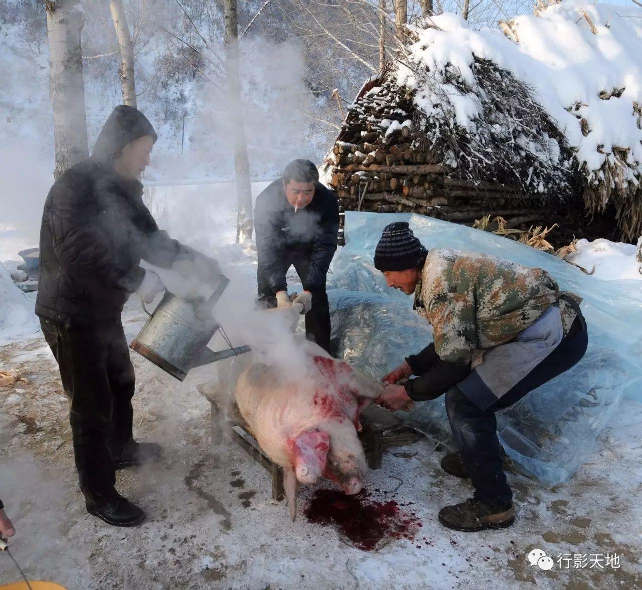 冰天雪地杀年猪 热气腾腾东北味_搜狐文化_搜狐网