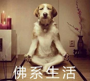 最近流行佛系生活?留学生发出佛祖般的大笑.