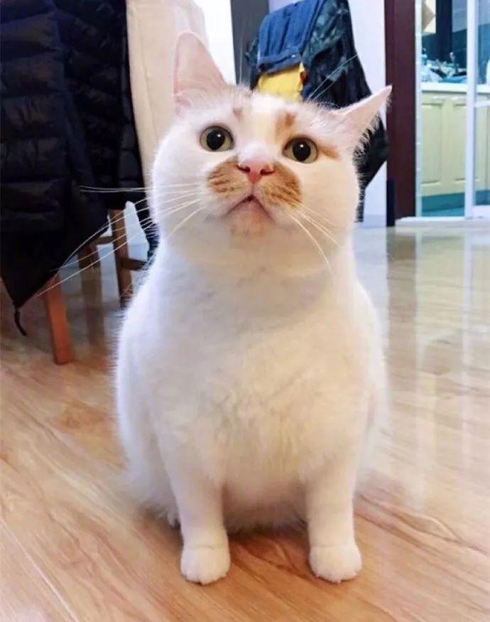 盘点一些网红表情猫