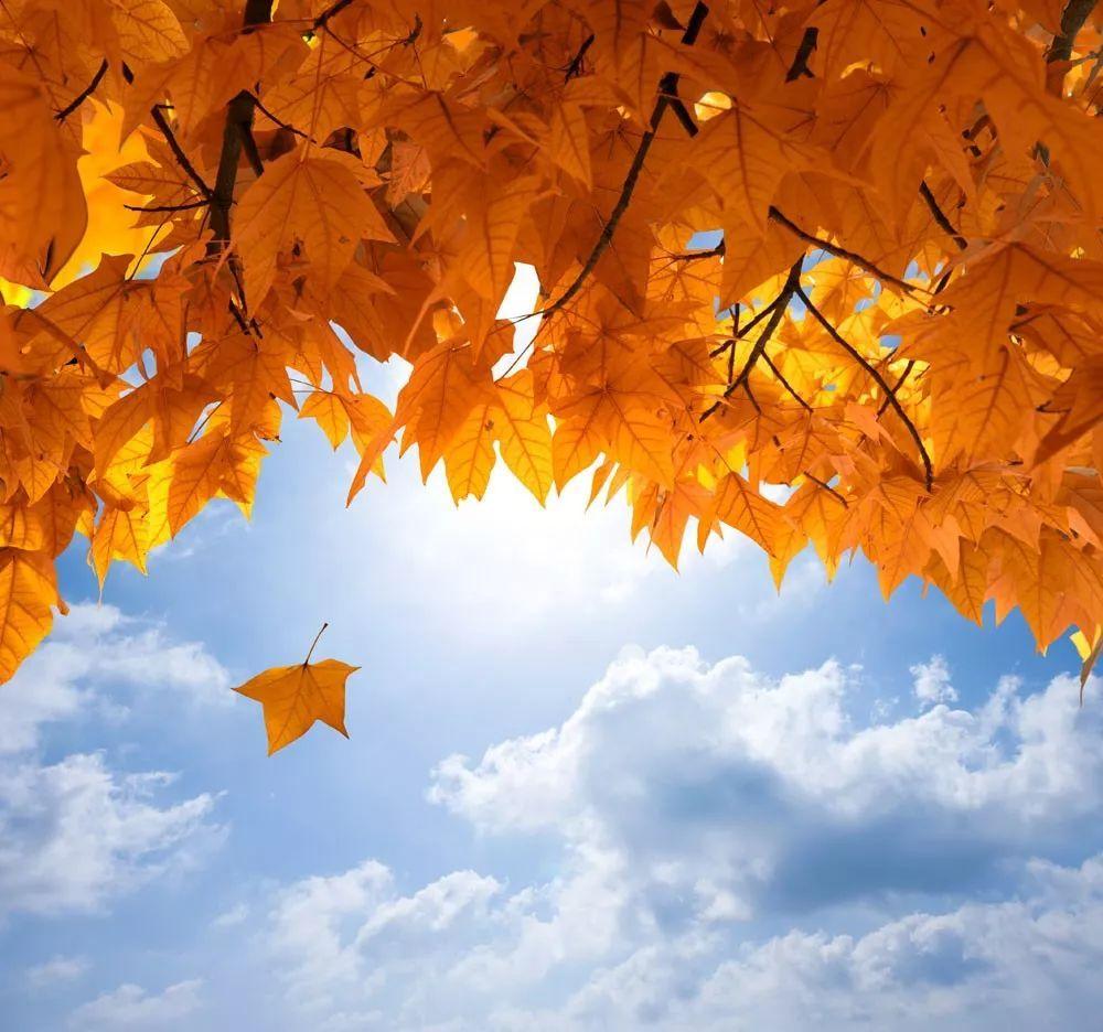 落叶归根图片