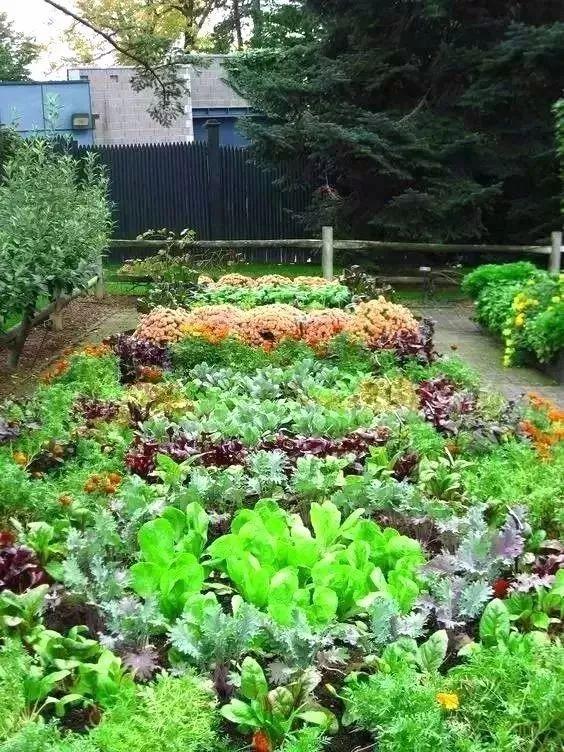 如果城市里也随处可见菜园蔬果 那都市是不是会更加美好呢 其实,蔬菜花园的创意在国外已成潮流 不少别墅的庭院会选择这样的设计 绿色天然已然成为一种潮流  西方有庭院的人家 可以按自己的喜好打造蔬菜花园 种上自己喜欢的花草和蔬菜 设计自己喜欢的景观 他们还起了一个很洋气的名字 叫做可食地景  美好的创意值得我们去学习 如果我们将这种生活方式引进 运用在在我们自己的庭院中 用瓜果蔬菜打造出来美观又实用的景观   用心去装饰,加入创意元素 看这扇用蔬菜做成的屏风 还以为是景观植物呢 多种蔬菜的搭配,宛若植物