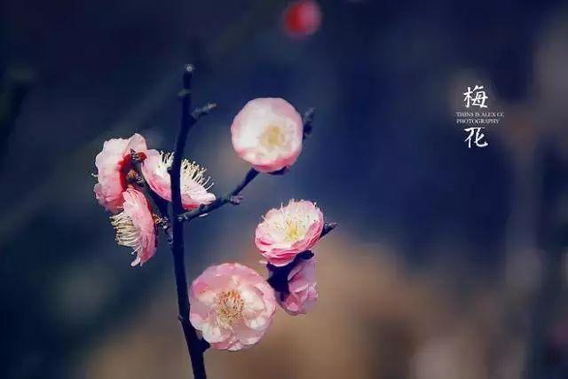 Rose【中国十大名花欣赏,大开眼界!】 - Rose - Rose Yang的博客