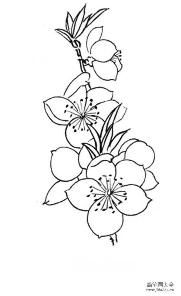 桃花眼影画法步骤固)�_白描桃花鸟鸣的绘画步骤