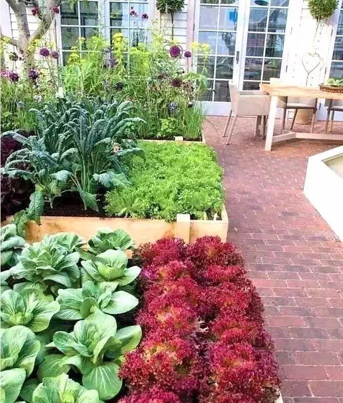 欧式花园已经out了?现在流行蔬菜庭院,好看还实用!