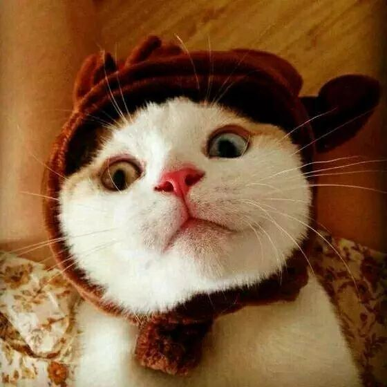 情侣头像,全是猫咪!