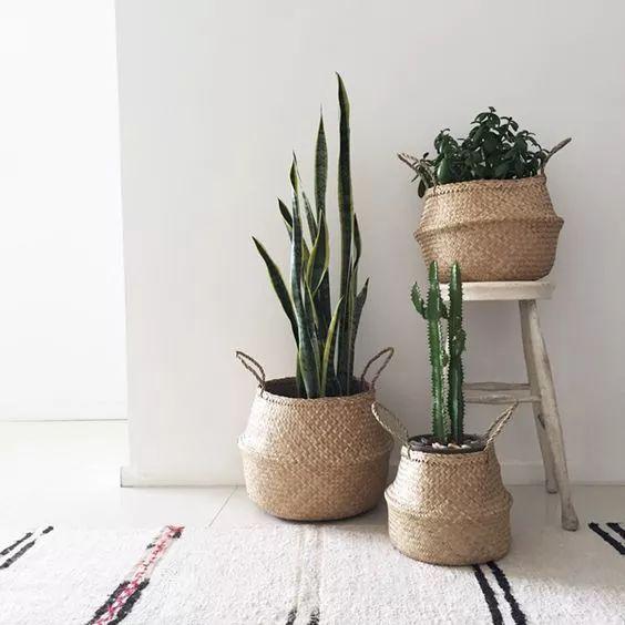 家居| 吸霾好养又貌美这些北欧系绿植,你们要么?图片